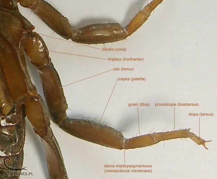 Pajęczaki (arachnida) to gromada licząca ponad 100 000 gatunków